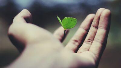 Growth oder Value? Welche Faktoren die neue Runde des ewigen Duells entscheiden könnten